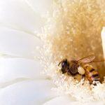 ScottsdaleEmergency-bees